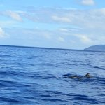 Dolphins next to the boat