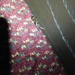 Insecto muerto de hace tres temporadas