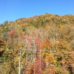 View from room 401(fall foliage)