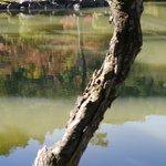 池に映える緑