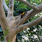 Rare multi-colored woodpecker inside Corbett Park