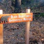 Black Bear Forest, Gatekeepers Museum Park, Tahoe City, Ca