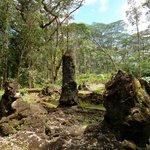 Interesting lava/tree mold formations