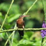 colibri in the garden