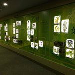 Display of various medicinal plants