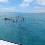 Dolphins just for us