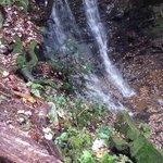McEwen Falls