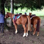 Very well cared for horses. Pic as they take a break on our horse riding trip