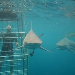My 1st open water shark cage dive :-)