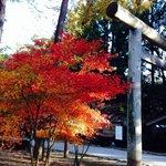 紅葉と鳥居。 11/3に行きました。夕方だったため、風が冷たく、秋を感じました。 敷地はとても広く、能舞台があらました。歌手のゆずがコンサートを行うようです。 なによりも紅葉の色がとても良かっ
