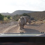 Even closer with the Rhinos