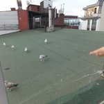 Feeding seagulls from roof terrace