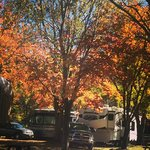 Campground in Fall Colors