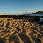 Sun Kissed Sands
