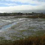 Bolinas Lagoon bei Niedrigwasser