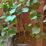 garden pot plant