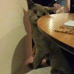 Тут можно выпить кофе с симпатичным котей:)