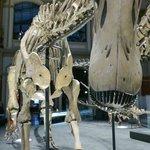 Dinosaures room: BIG one!