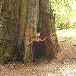 Golden Spruce Trail