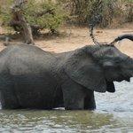 Elephant bathing at Gomo Gomo