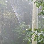 Impressive spider web