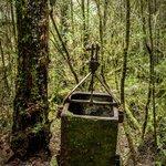 Relic in the Rainforest. Harris Reward mines