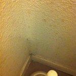 Taches d'excréments sur les murs des toilettes des chambres.