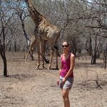Walking close by a Giraffe