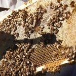 Signature Bee Experience