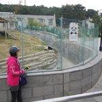 劉公島上有熊貓,梅花鹿