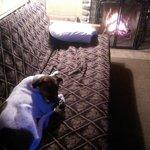 The pup enjoying the fireplace