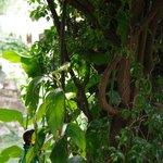Nell giardino