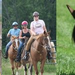 Guided Trail Rides available Memorial Day through Columbus Day