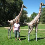 The Giraffes and I in the Garden
