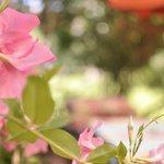 la terrase / garden