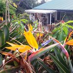Surrounded by birds of paradise