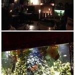 L aquarium