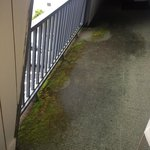 Moss on balcony
