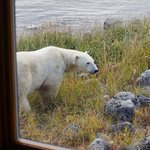 Bear view from inside the lodge