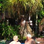 Bubli spa under the Banjon Tree
