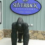 """Silverback"" awaits your arrival!"