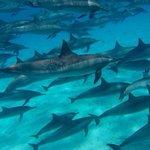 Viele Delphine hautnah