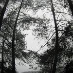 Panorama hutan di kawasan Telaga Sarangan