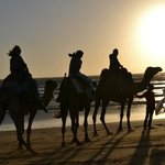 Moroccan Journeys - Day Tours