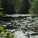 Pond at Jacksonville Arboreteum