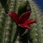 Bevans Black Opal & Cactus Nursery