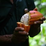 Desmond, our nature guide, serving us wild cocao