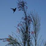 hummingbird on the patio