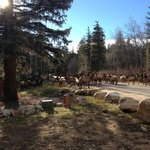 River Spruce Traffic Jam