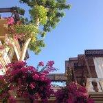 Vue du jardin sur deux terrasses et le bougainvillier